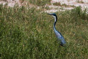 Africa, Birds, Tanzania, Tarangire